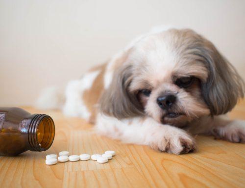 6 Ways to Guarantee Success When Medicating Your Pet
